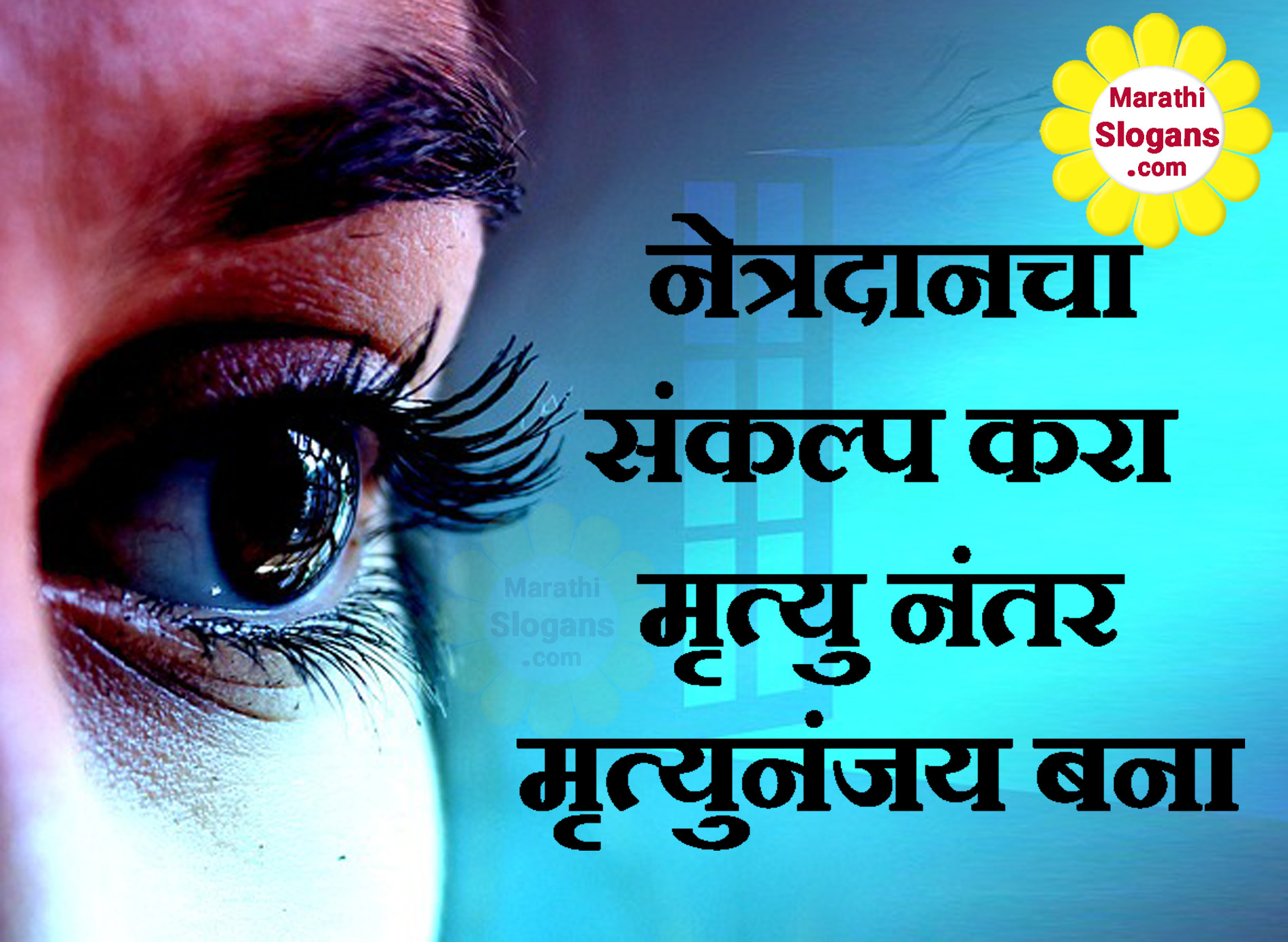 eye donation in marathi translation Play hundreds of free online trivia quizzes test your general knowledge in music, movies, history, television, sports, trivia, current.